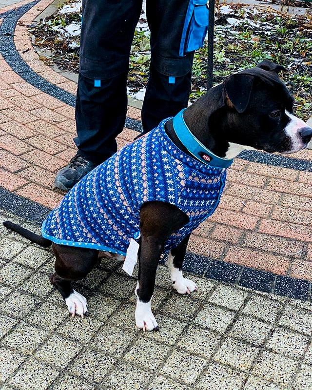 Zimné oblečenie pre psa