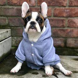 Oblečenie pre psa