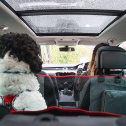Ochrana sedadiel pre psa