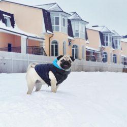 oblecenie na zimu pre psa
